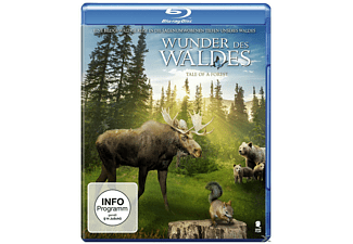 Wunder des Waldes - Tale of a forest - (Blu-ray)
