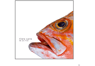 Clara Luzia - We Are Fish - (CD)