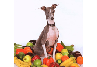 Shellac - EXCELLENT ITALIAN GREYHOUND - (CD)
