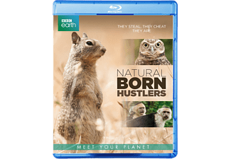 BBC Earth - Natural Born Hustlers | Blu-ray
