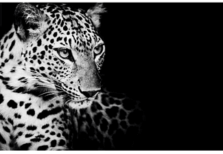 Leoparden Poster Kings of Nature