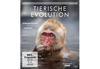 David Attenborough: Tierische Evolution - (Blu-ray)
