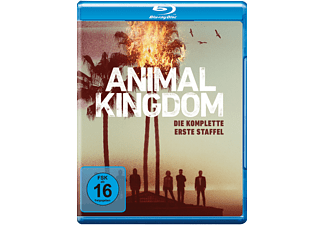 Animal Kingdom: Die komplette 1. Staffel [DVD]