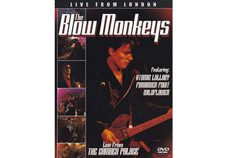 The Blow Monkeys - Live From London - (DVD)