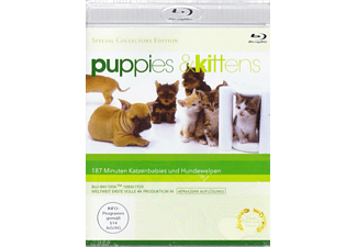 Puppies & Kittens - (Blu-ray)