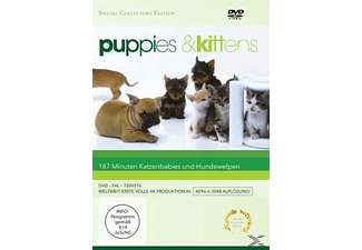 Puppies & Kittens - (DVD)