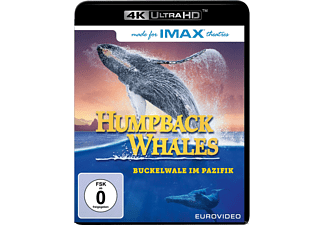 Humpback Whales - (4K Ultra HD Blu-ray)