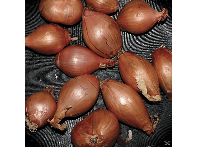 Ty Segall - FRIED SHALLOTS (12 INCH EP) [Vinyl]